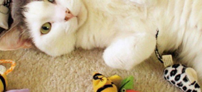 Домашние кошки и игрушки. Часть 1