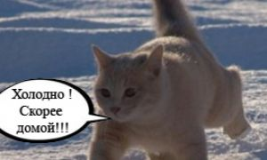 Милые кошки зимой