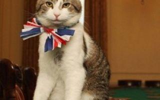 Английский кот Ларри отправлен в отставку