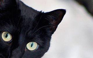 Первая статья о кошке