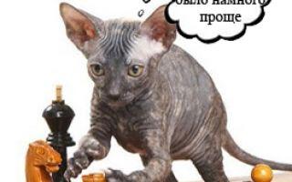 Обычный кот и компьютерная игра
