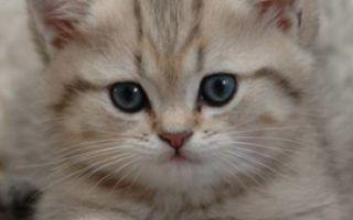 Как завести питомца, если у вас аллергия на кошек