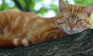 Домашняя кошка на дереве. Часть 1