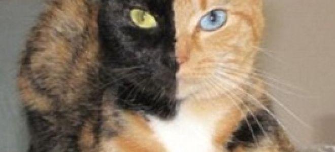 Удивительная кошка Венера