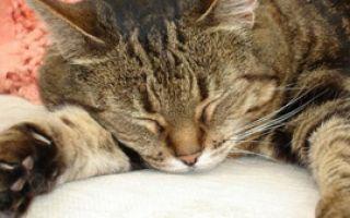 Почему кошка спит так много?
