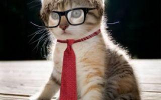 Домашний кот и передача «Что? Где? Когда?»