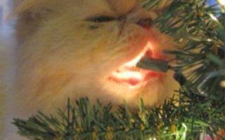 Моя кошка и Новый год
