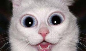 Немного юмора. Часть вторая: Любимая кошка