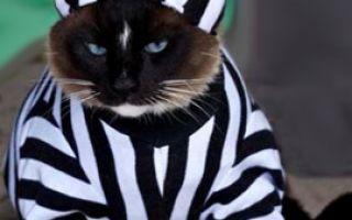 Домашний кот— воришка